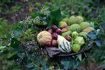 Herbst - Autumn - Automne - Autunno I