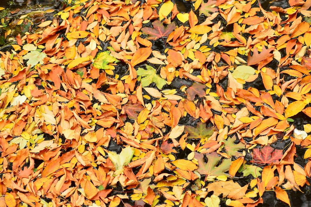 Herbst