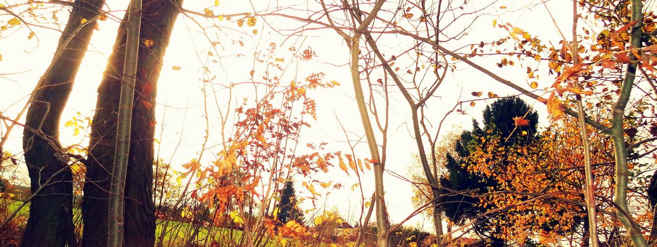 Herbst Bäume