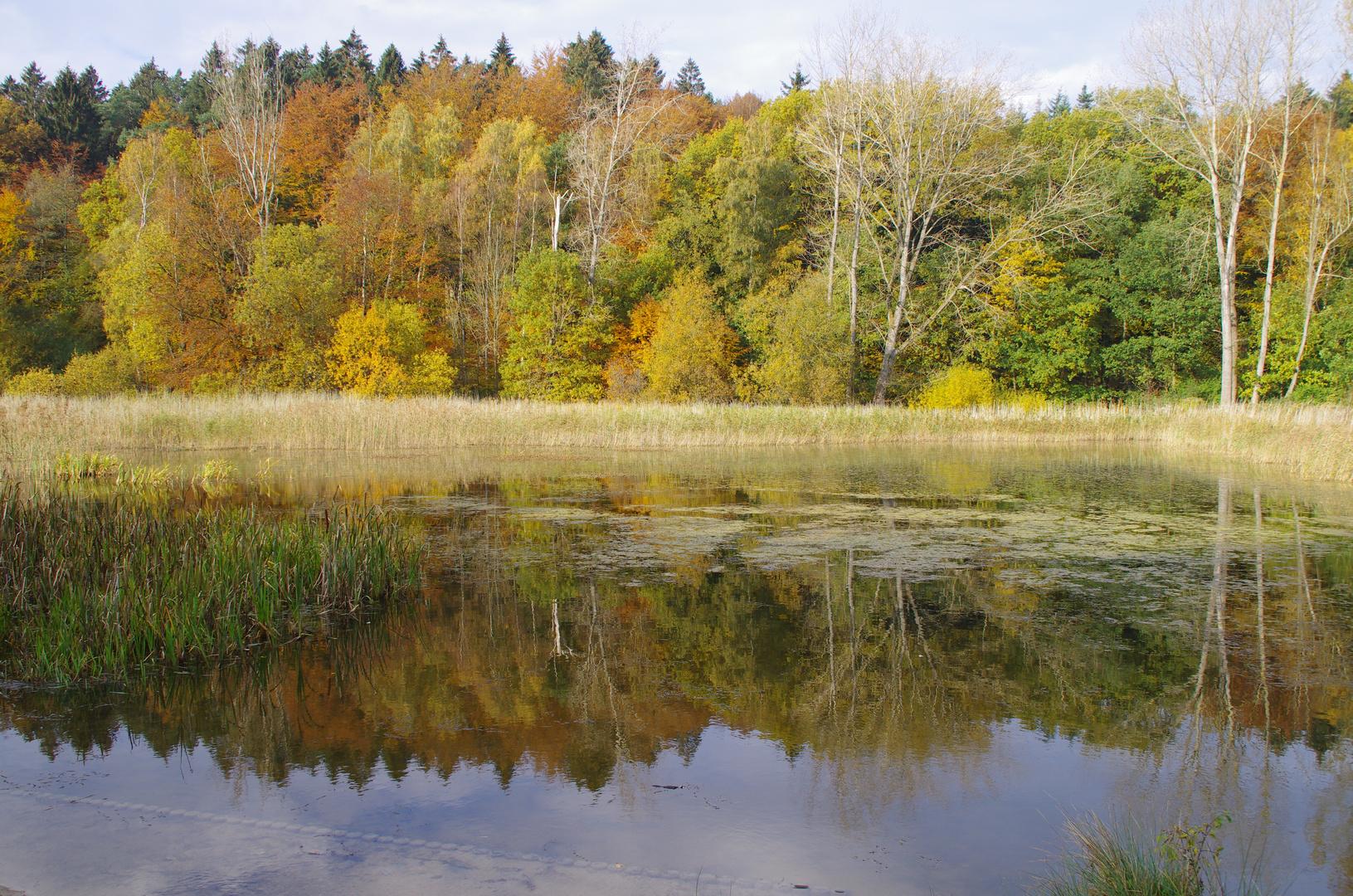 Herbst bei den Klosterteichen