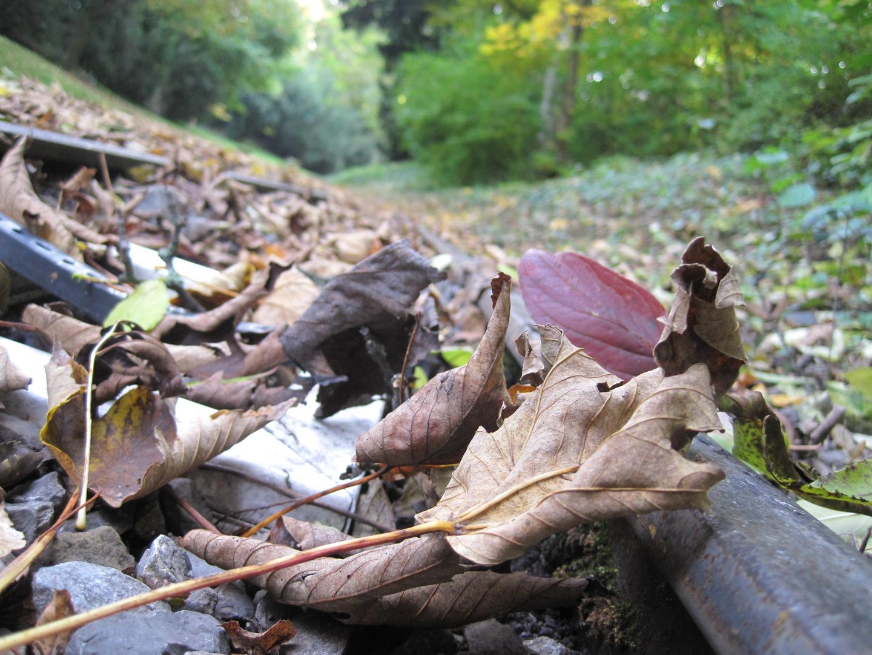 Herbst bei Schiene