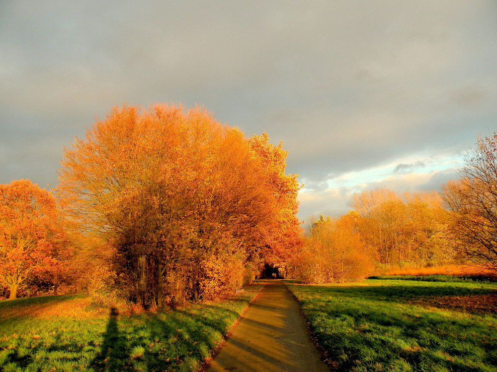 Herbst bei uns am Rhein