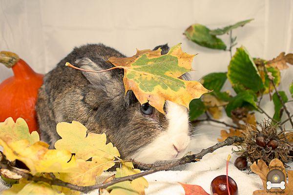 Herbst bei Zwergkaninchen Max