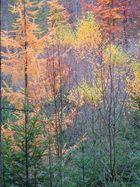 Herbst bis in die Spitzen