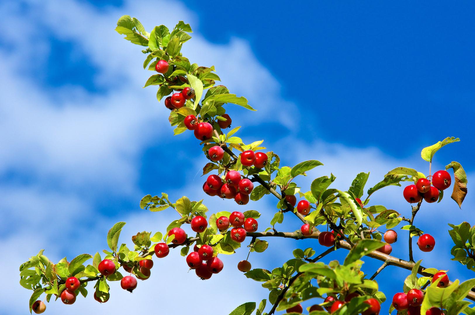 Herbst - blauweiß und rotgrün -