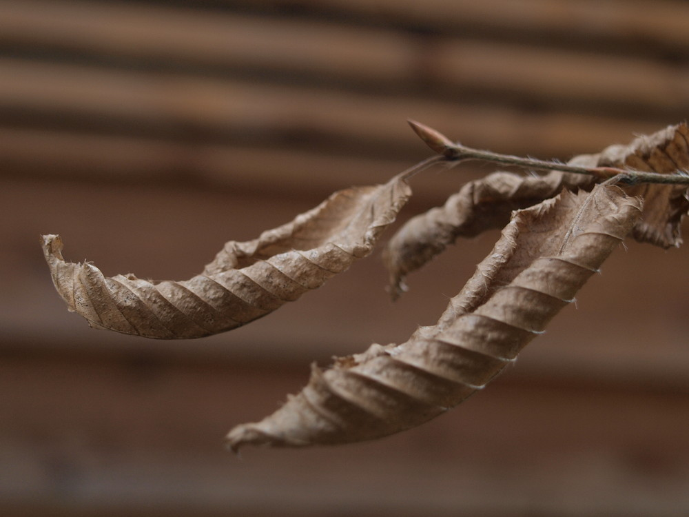 Herbst Bletter