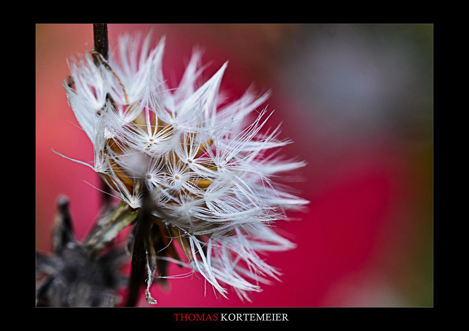 Herbst Blüte