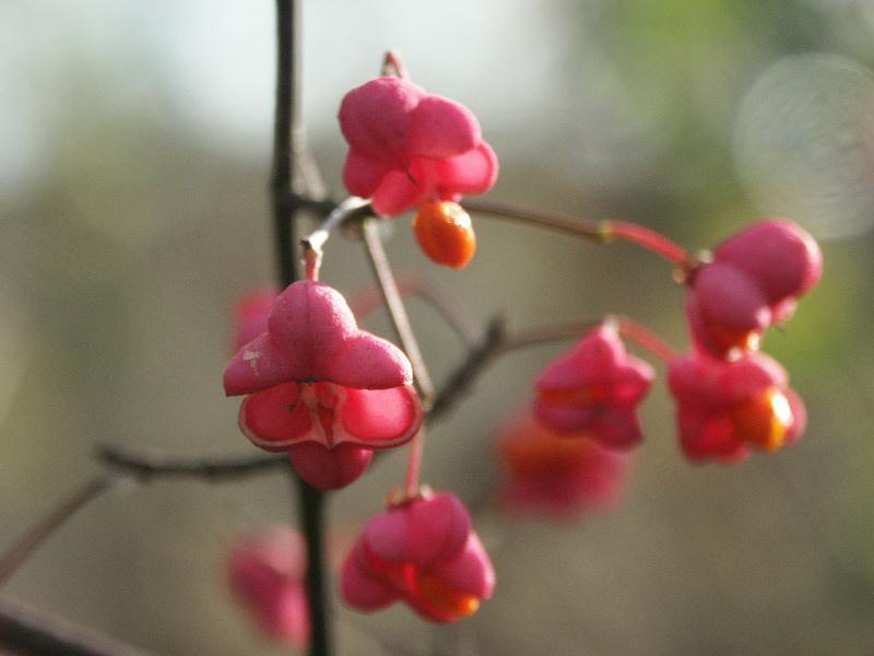Herbst Blüten