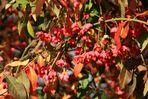 Herbst-Blüten