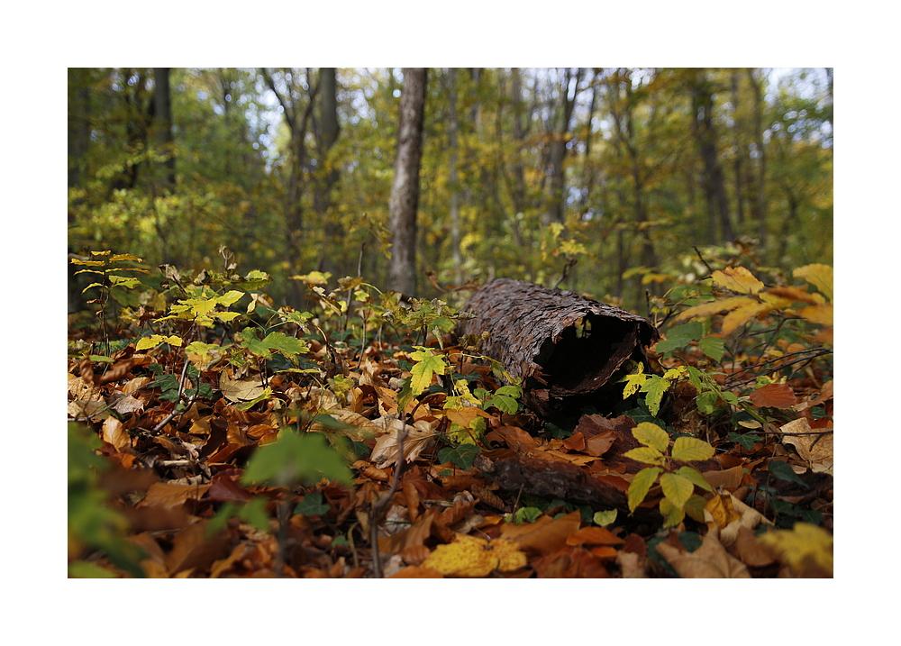 Herbst - Borke