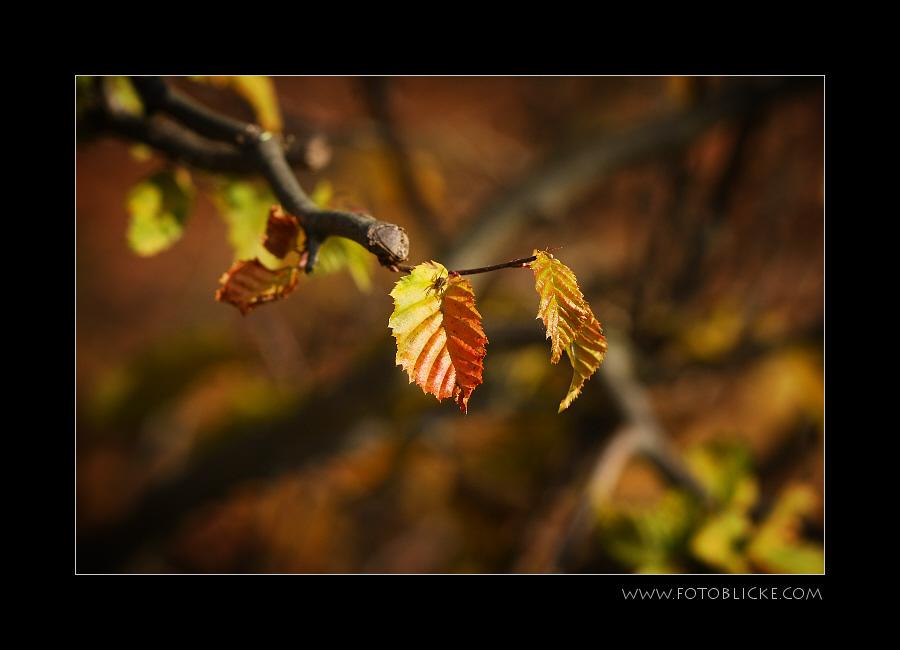 Herbst Buchen Blatt mit Besuch