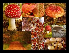 Herbst Collage...