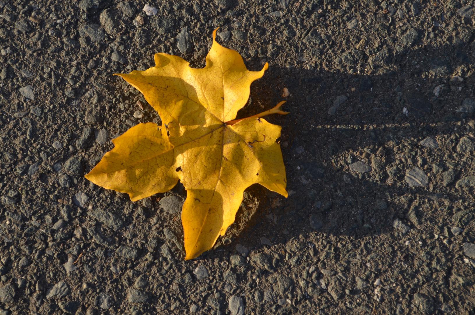 Herbst :D