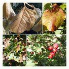 Herbst *