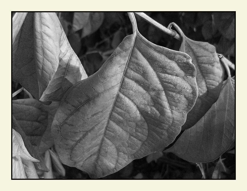 Herbst **