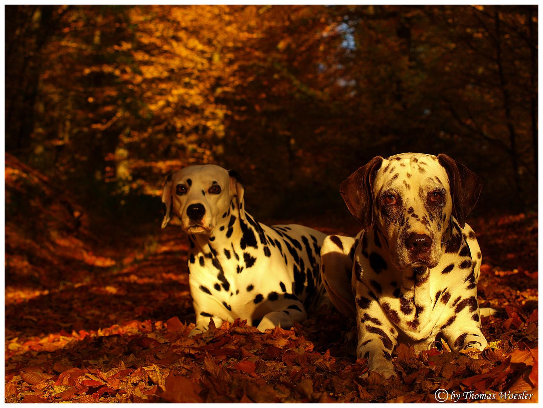 Herbst -Dalmis :)