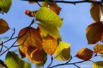 Herbst - der beste Maler der Jahreszeiten