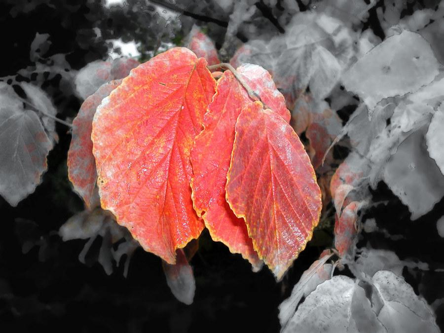 Herbst der Gedanken