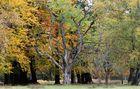 Herbst des Lebens...