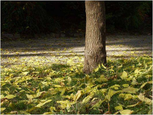 Herbst-Detail