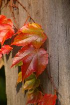 Herbst-Details