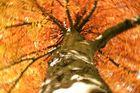 Herbst Drehung