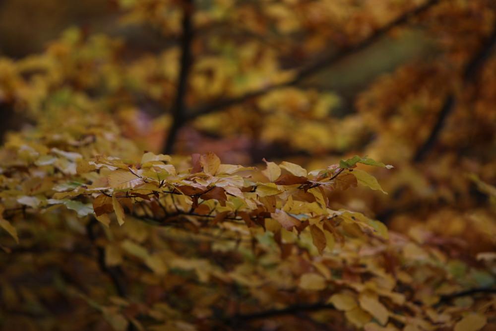 Herbst einfach mal schauen