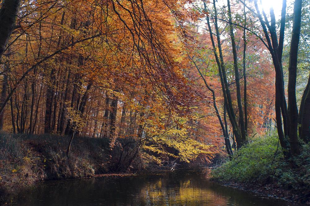 Herbst entlang der Eisch