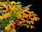 Herbst*