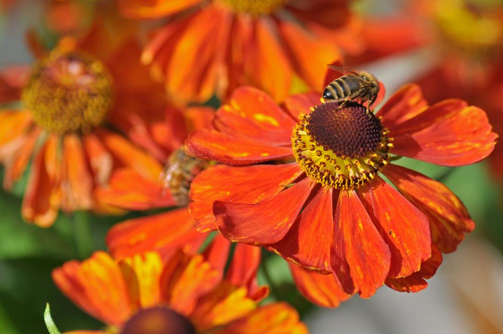 Herbst - farben