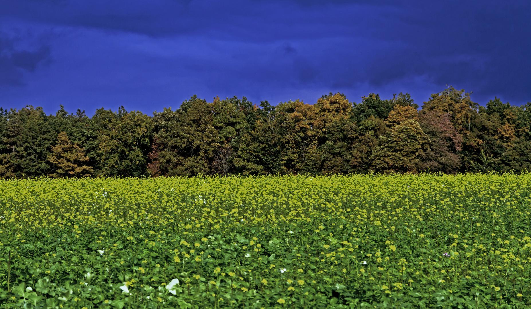 Herbst-Farben-Rausch