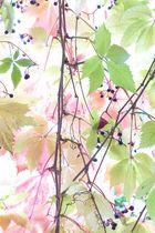 Herbst farbenfroh und abstrakt