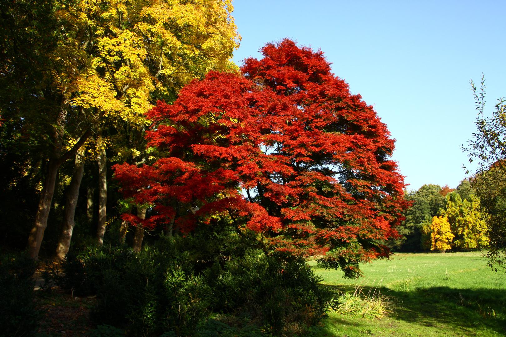 Herbst - Feuer