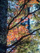 Herbst Fotowalk