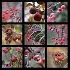 Herbst-Früchte