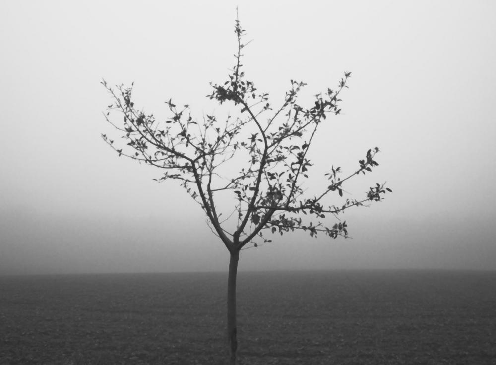 Herbst - Getrübter Blick und doch wird was sichtbar...
