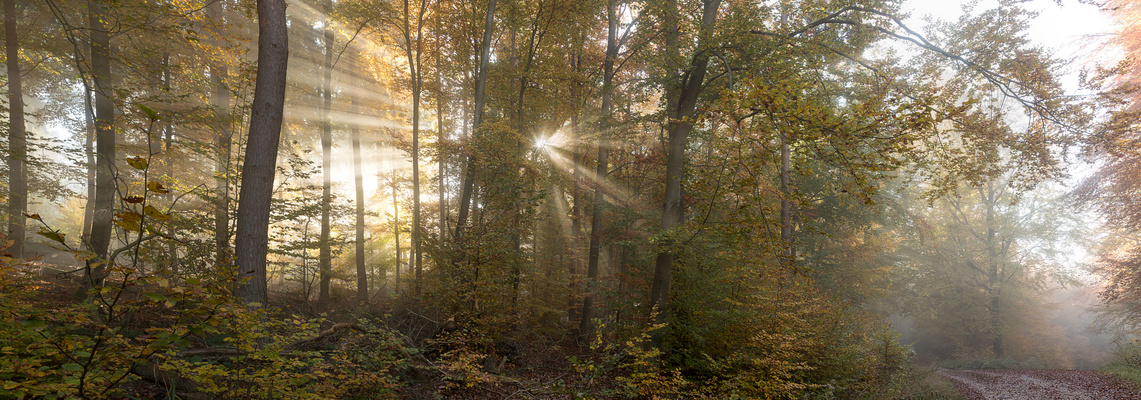 ***   HERBST - GOLD  ***