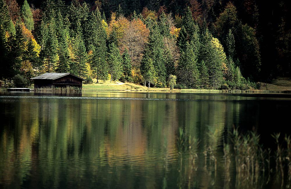 Herbst: Goldenes Laub an den Bäumen und ein Laubteppich auf dem Boden.