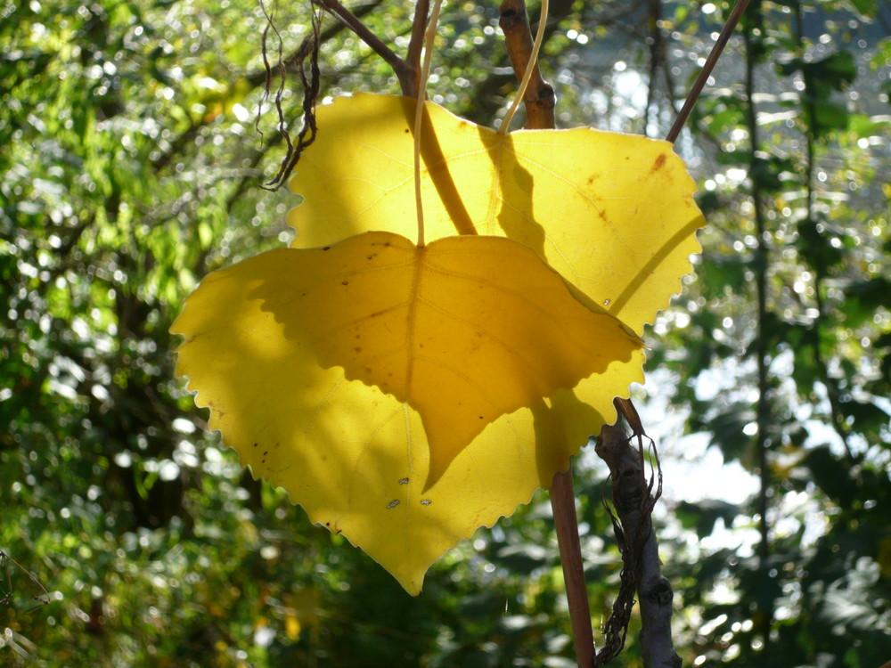 Herbst-herzen