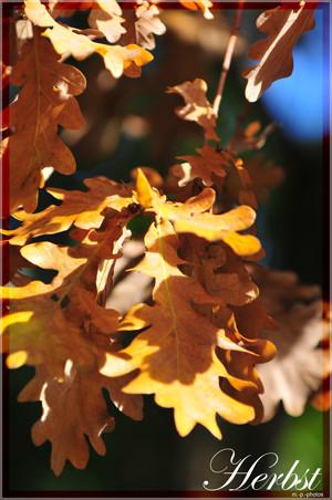*Herbst I*