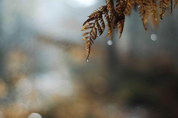 Herbst, ich mag dich (2)