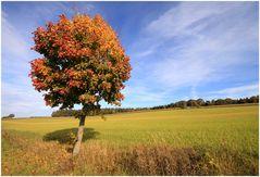 Herbst II