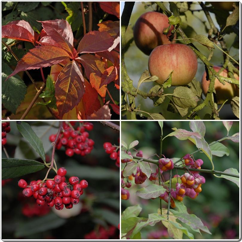 Herbst III *