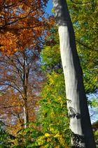 Herbst im 5-Seenland 3