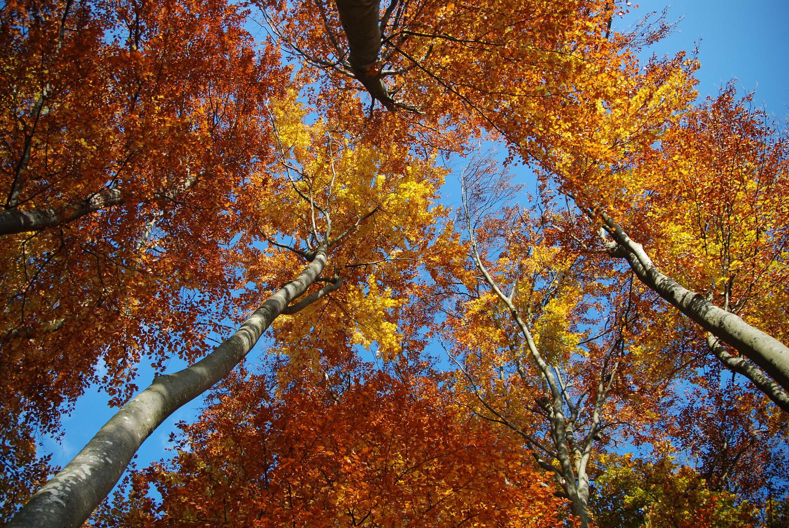 Herbst im 5-Seenland