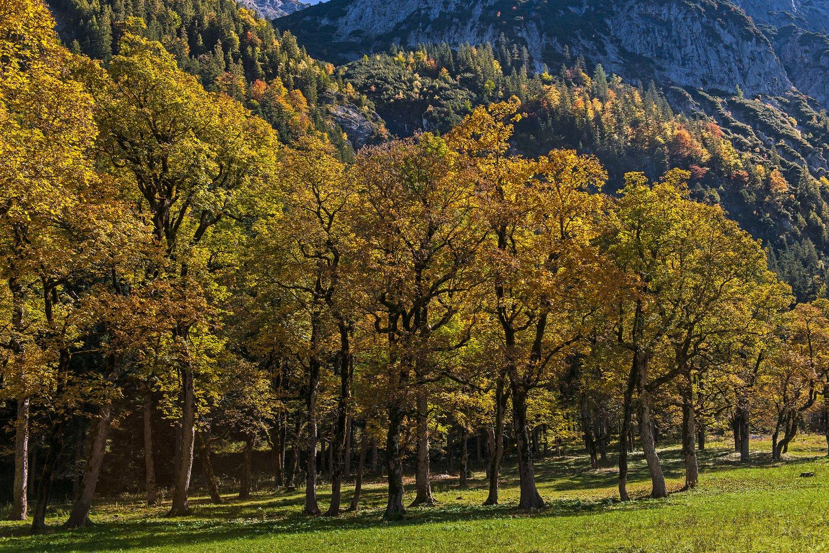 Herbst im Ahornboden - 2