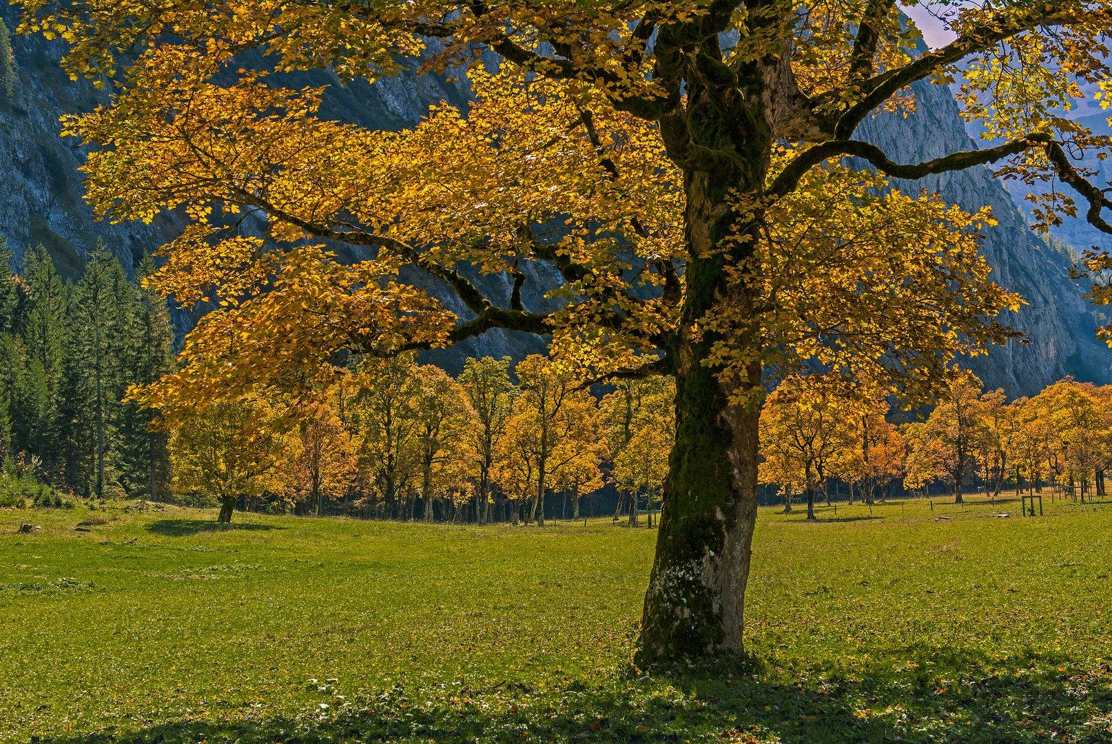 Herbst im Ahornboden