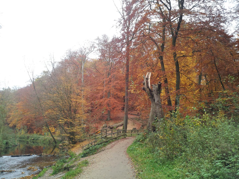Herbst im Alsterpark Hamburg