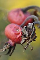 Herbst im Anmarsch