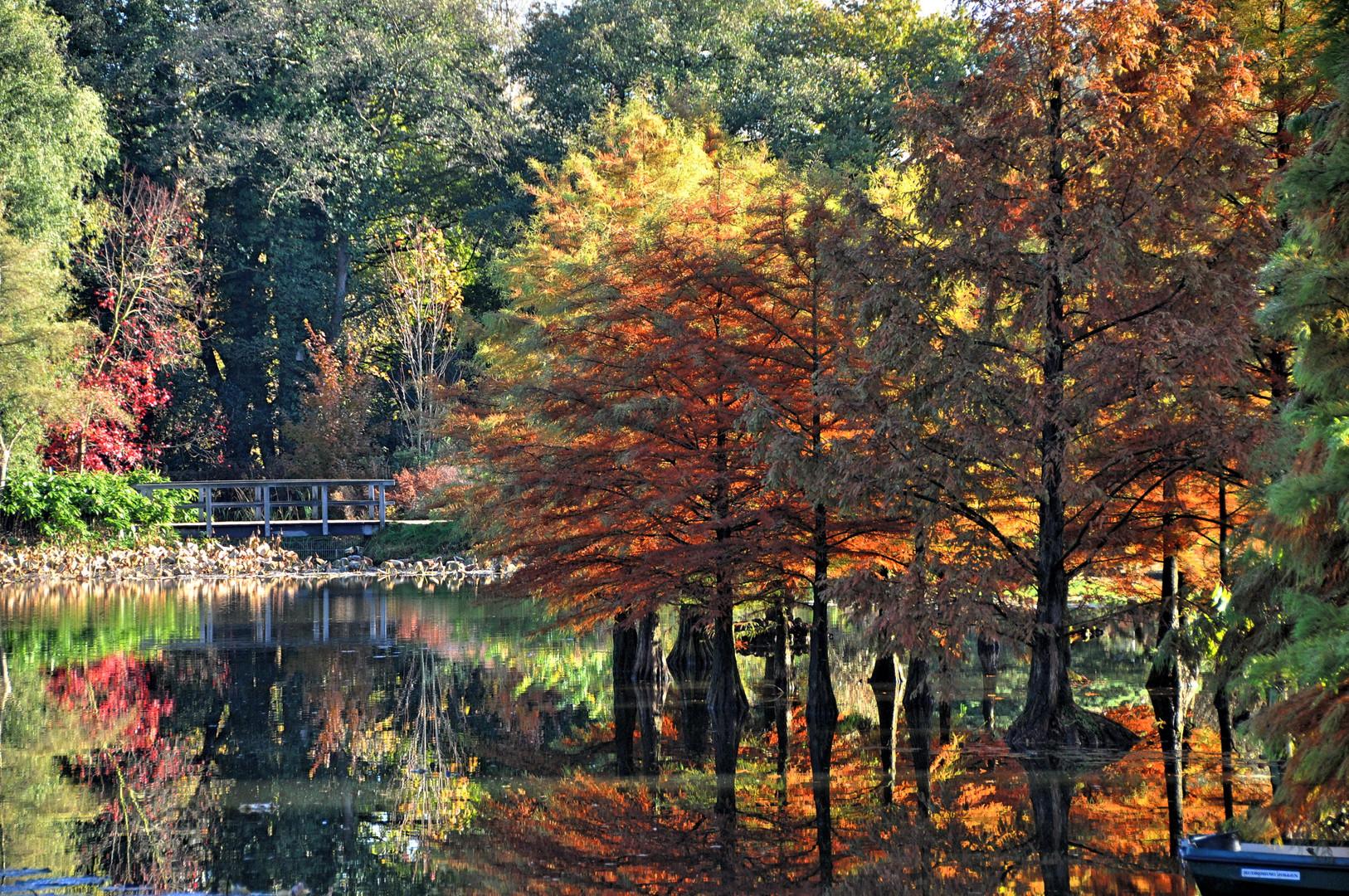Herbst im Arboretum Ellerhop
